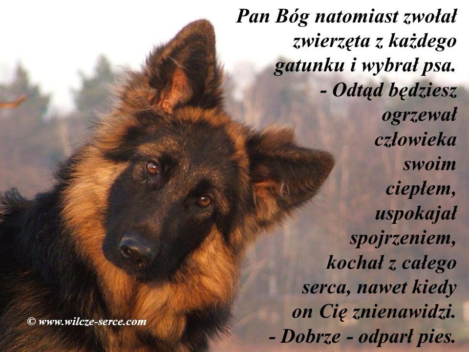 Pan Bóg natomiast zwołał zwierzęta z każdego gatunku i wybrał psa