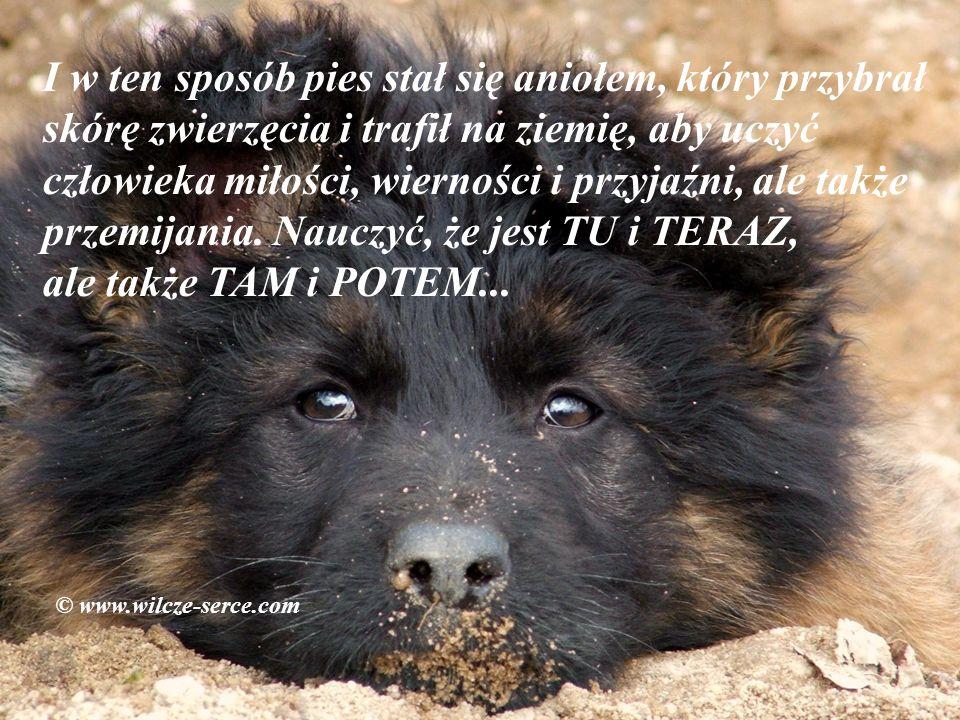 I w ten sposób pies stał się aniołem, który przybrał skórę zwierzęcia i trafił na ziemię, aby uczyć człowieka miłości, wierności i przyjaźni, ale także przemijania. Nauczyć, że jest TU i TERAZ, ale także TAM i POTEM...