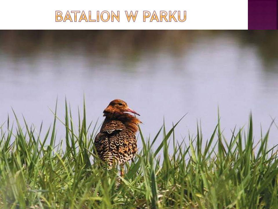 Batalion w parku