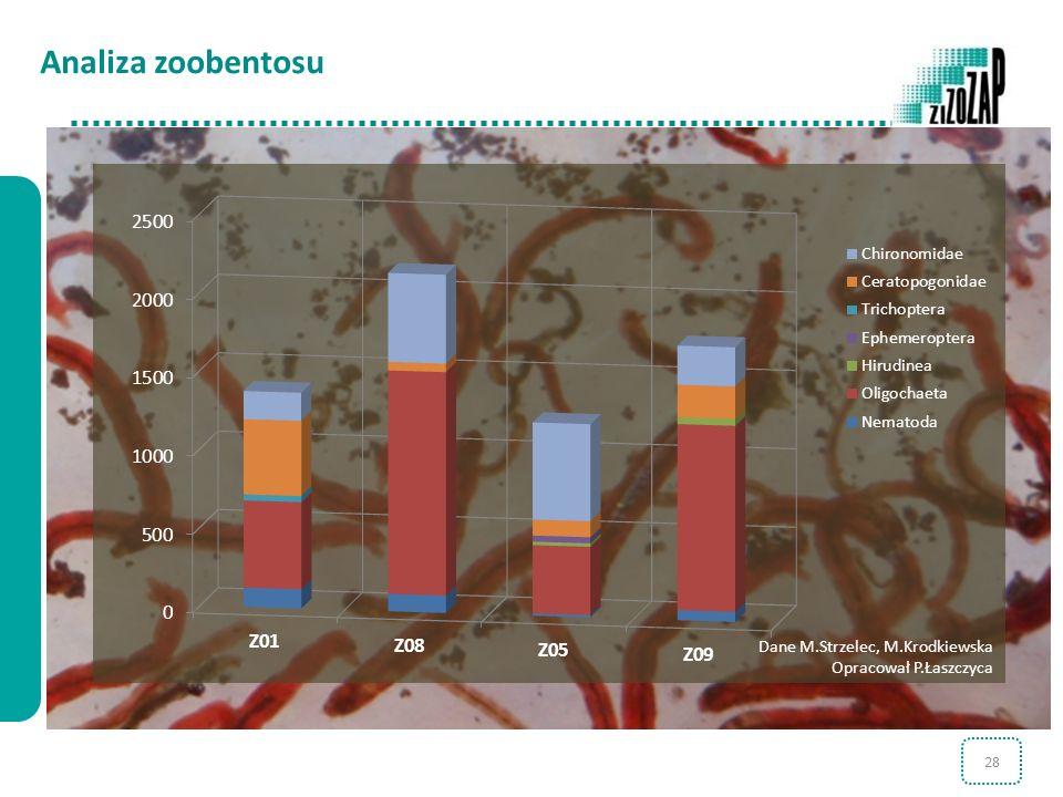 Analiza zoobentosu Dane M.Strzelec, M.Krodkiewska