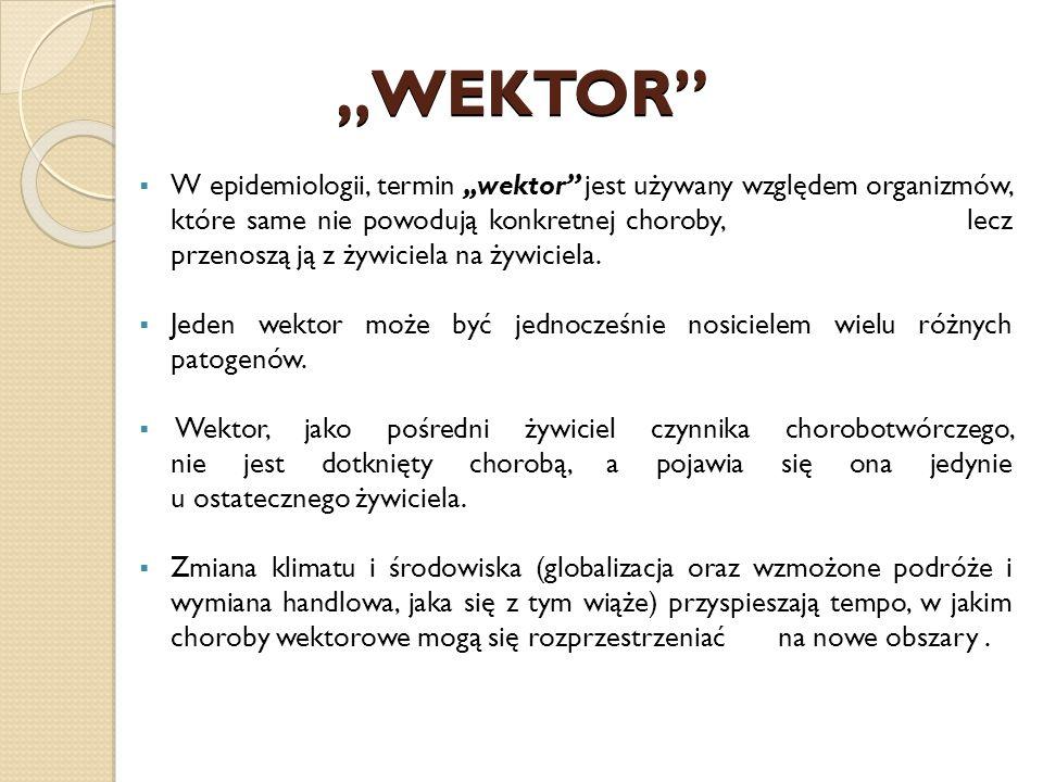 """WEKTOR"