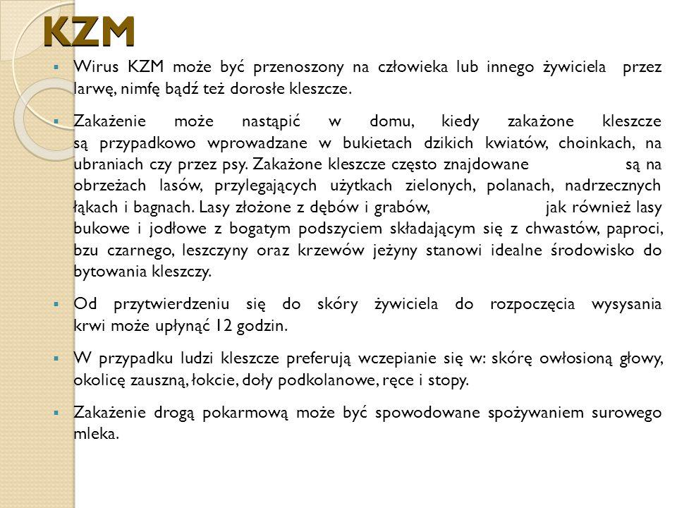 KZM Wirus KZM może być przenoszony na człowieka lub innego żywiciela przez larwę, nimfę bądź też dorosłe kleszcze.