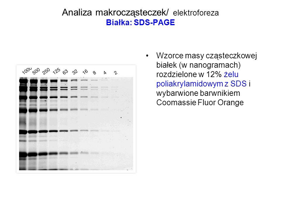 Analiza makrocząsteczek/ elektroforeza Białka: SDS-PAGE