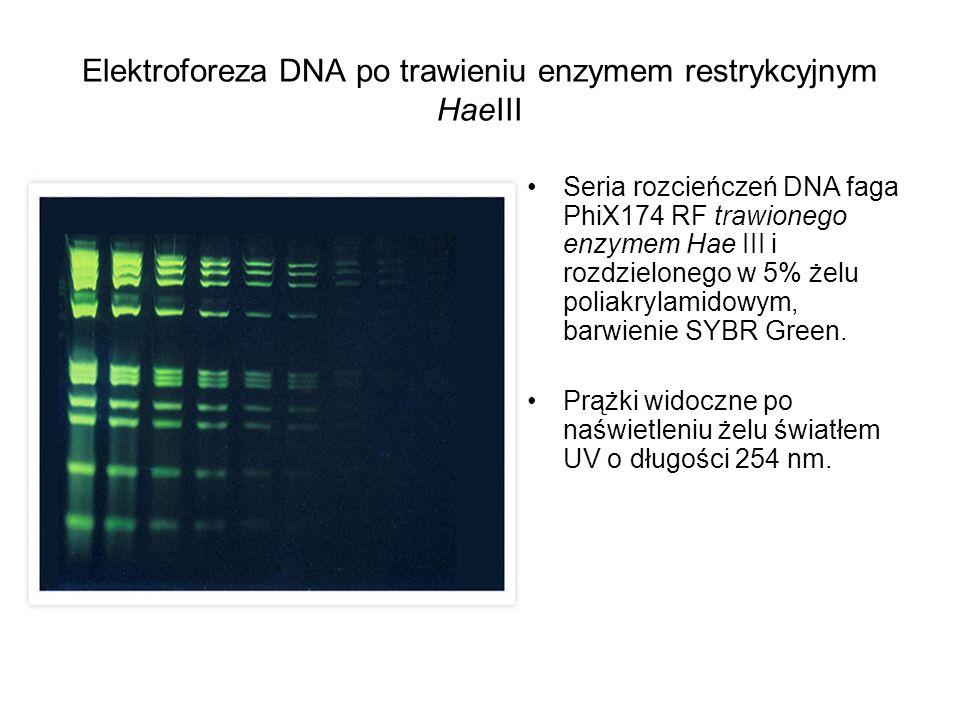 Elektroforeza DNA po trawieniu enzymem restrykcyjnym HaeIII