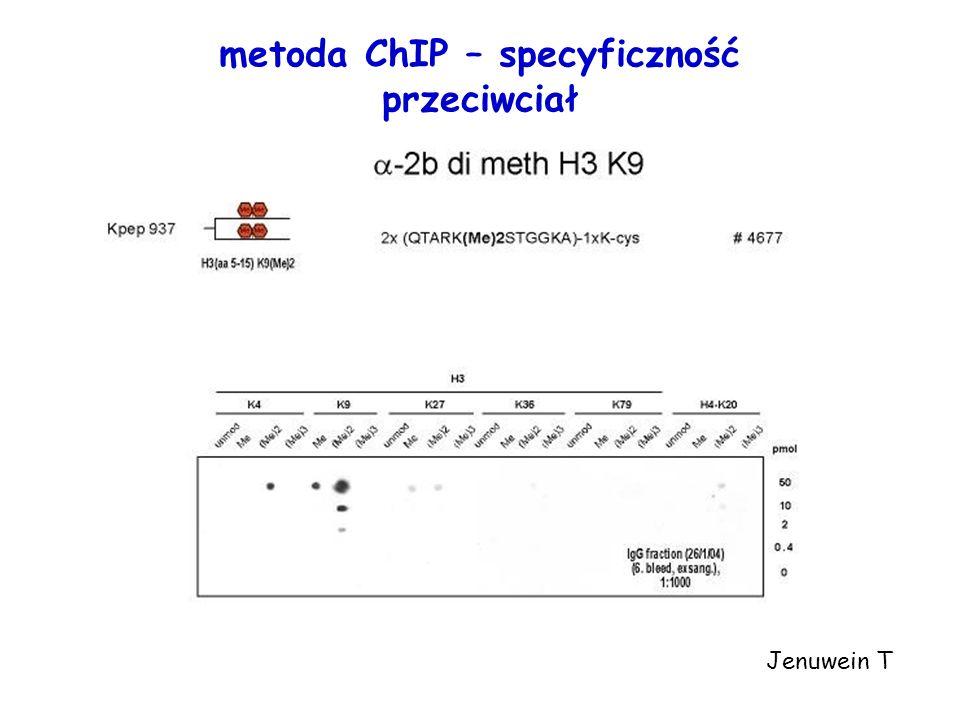 metoda ChIP – specyficzność przeciwciał