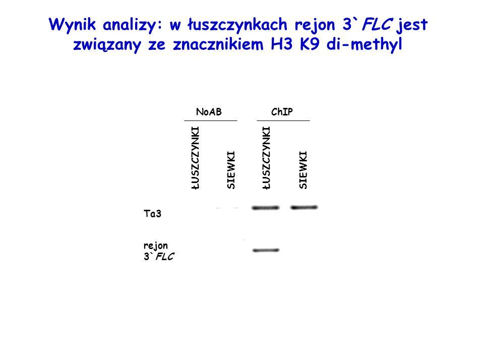 Wynik analizy: w łuszczynkach rejon 3`FLC jest związany ze znacznikiem H3 K9 di-methyl