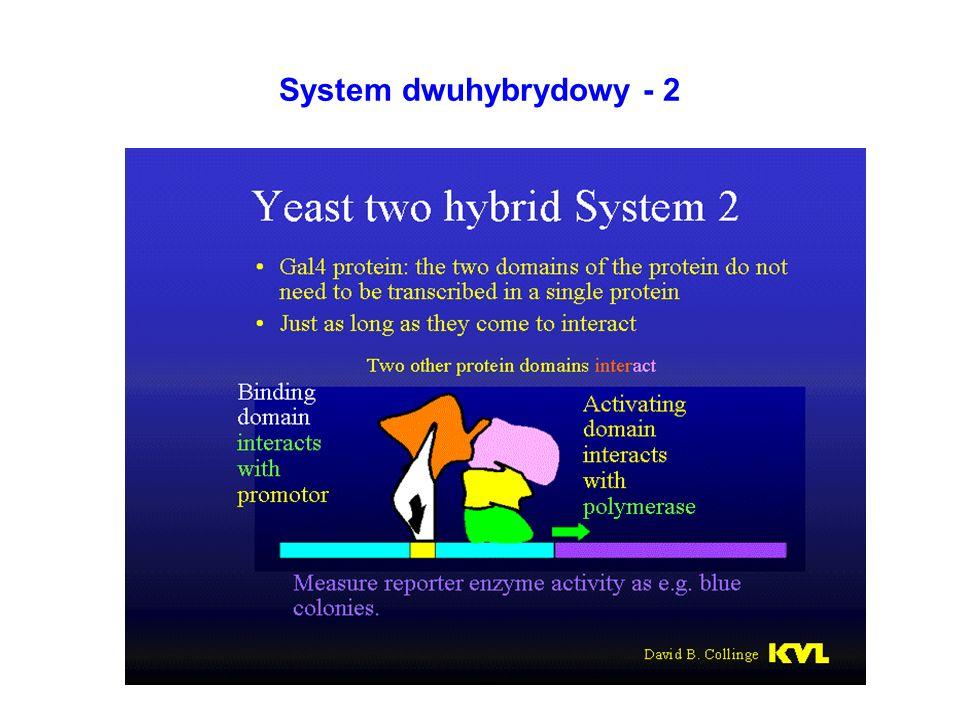 System dwuhybrydowy - 2