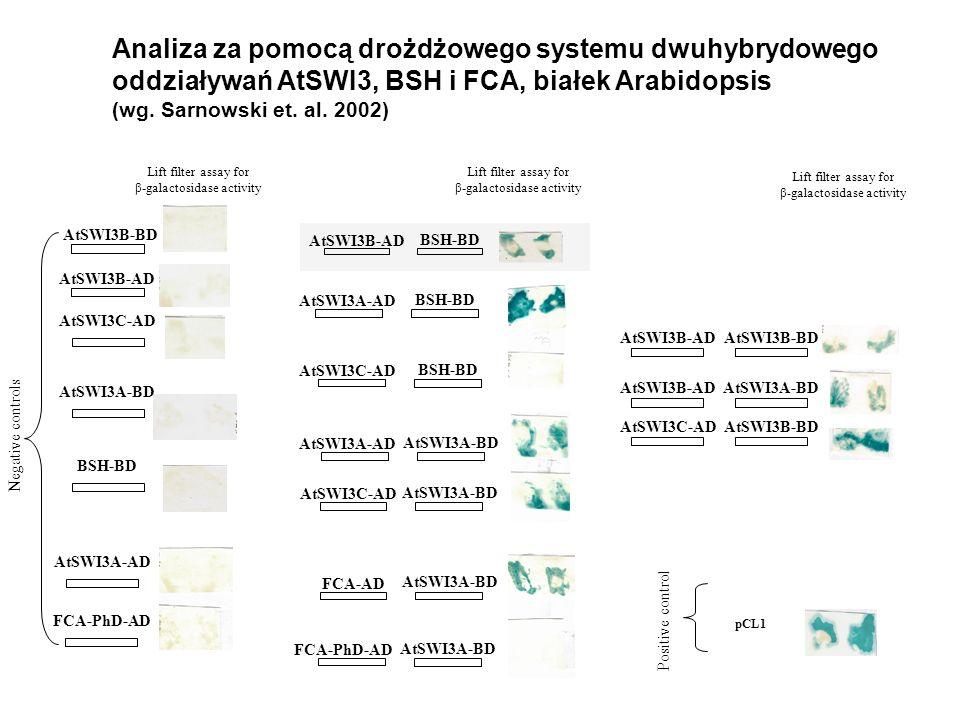 Analiza za pomocą drożdżowego systemu dwuhybrydowego