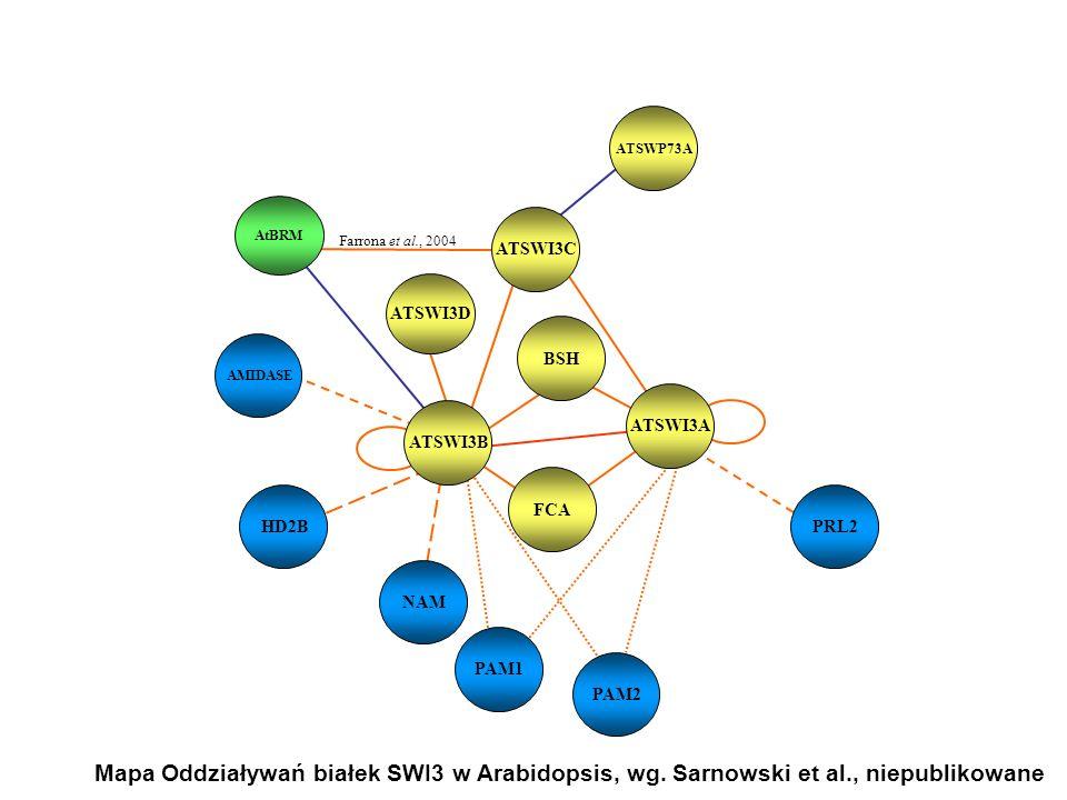 ATSWI3C BSH. ATSWI3A. ATSWI3B. FCA. ATSWI3D. AtBRM. Farrona et al., 2004. ATSWP73A. HD2B. NAM.