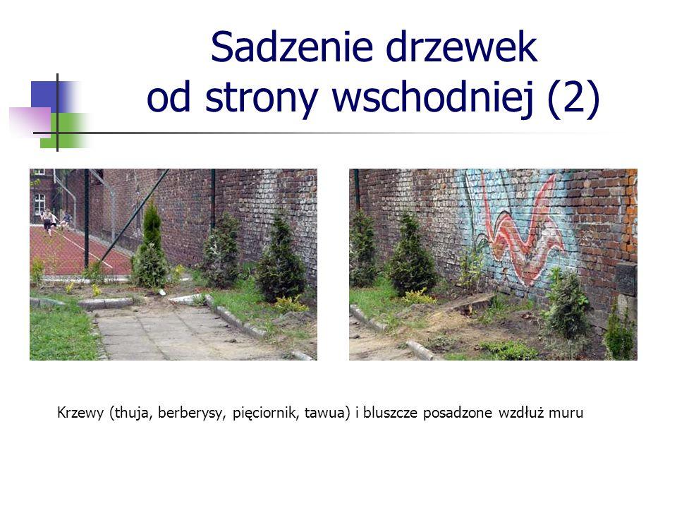 Sadzenie drzewek od strony wschodniej (2)