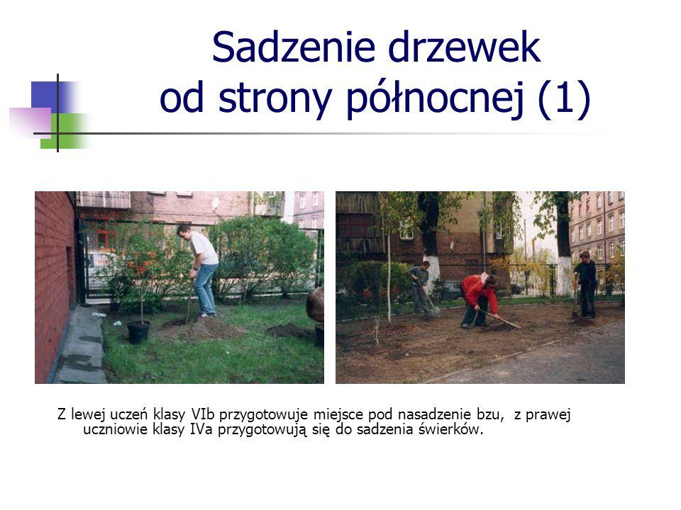 Sadzenie drzewek od strony północnej (1)