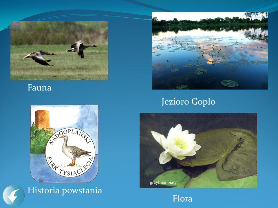 Fauna Jezioro Gopło Historia powstania Flora