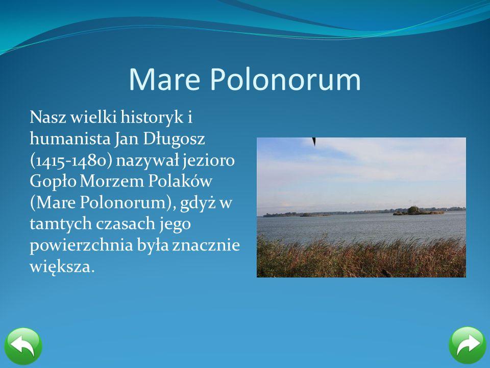 Mare Polonorum