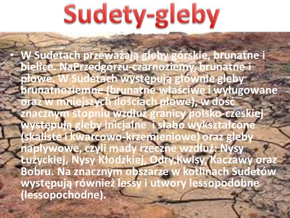 Sudety-gleby
