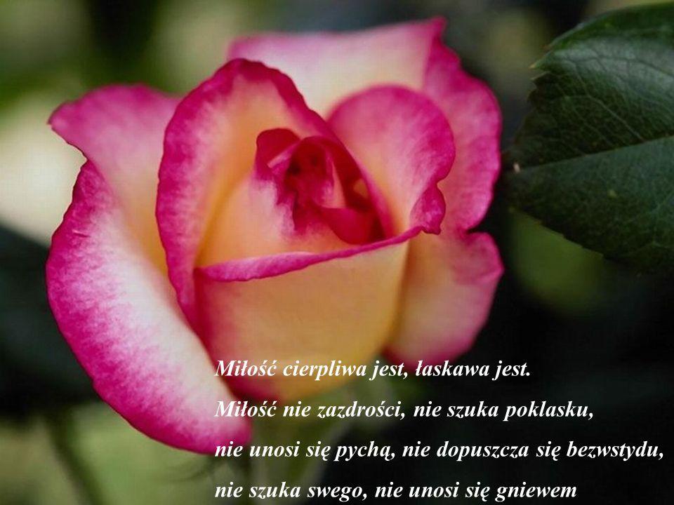 Miłość cierpliwa jest, łaskawa jest.
