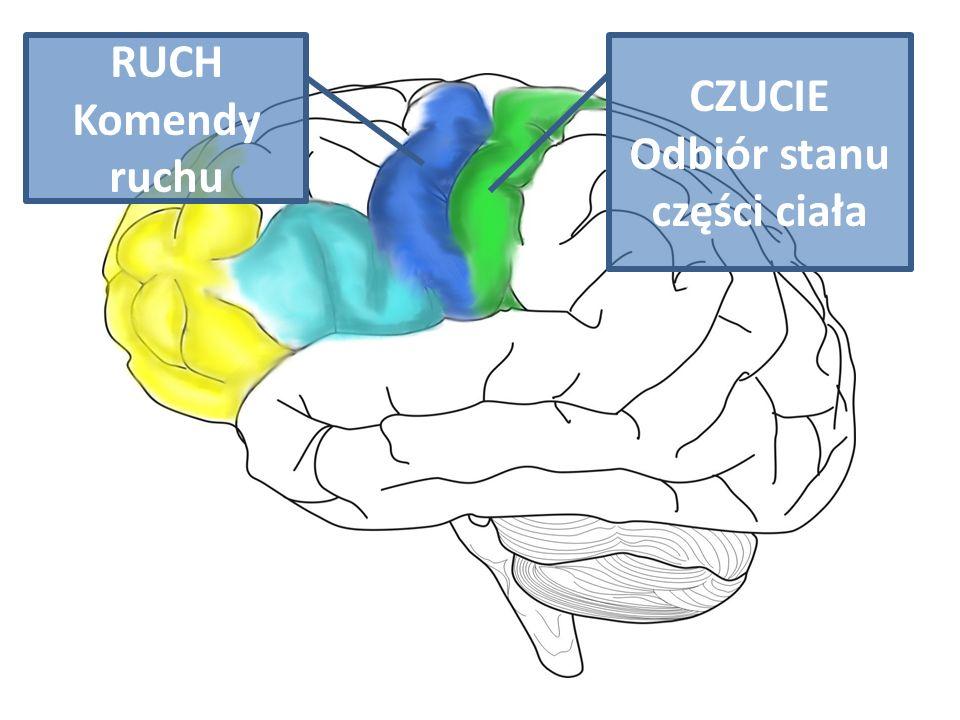 Odbiór stanu części ciała