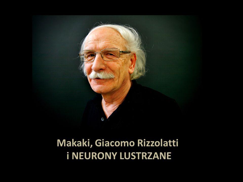 Makaki, Giacomo Rizzolatti i NEURONY LUSTRZANE