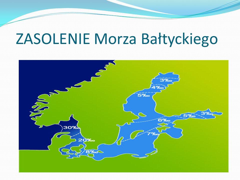 ZASOLENIE Morza Bałtyckiego