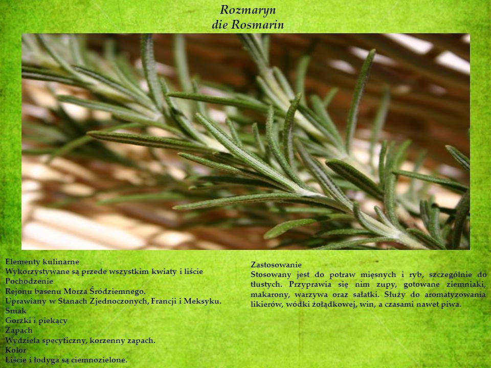 Rozmaryn die Rosmarin Elementy kulinarne Zastosowanie
