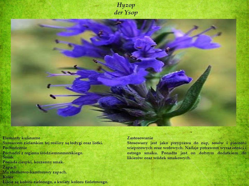 Hyzop der Ysop Elementy kulinarne