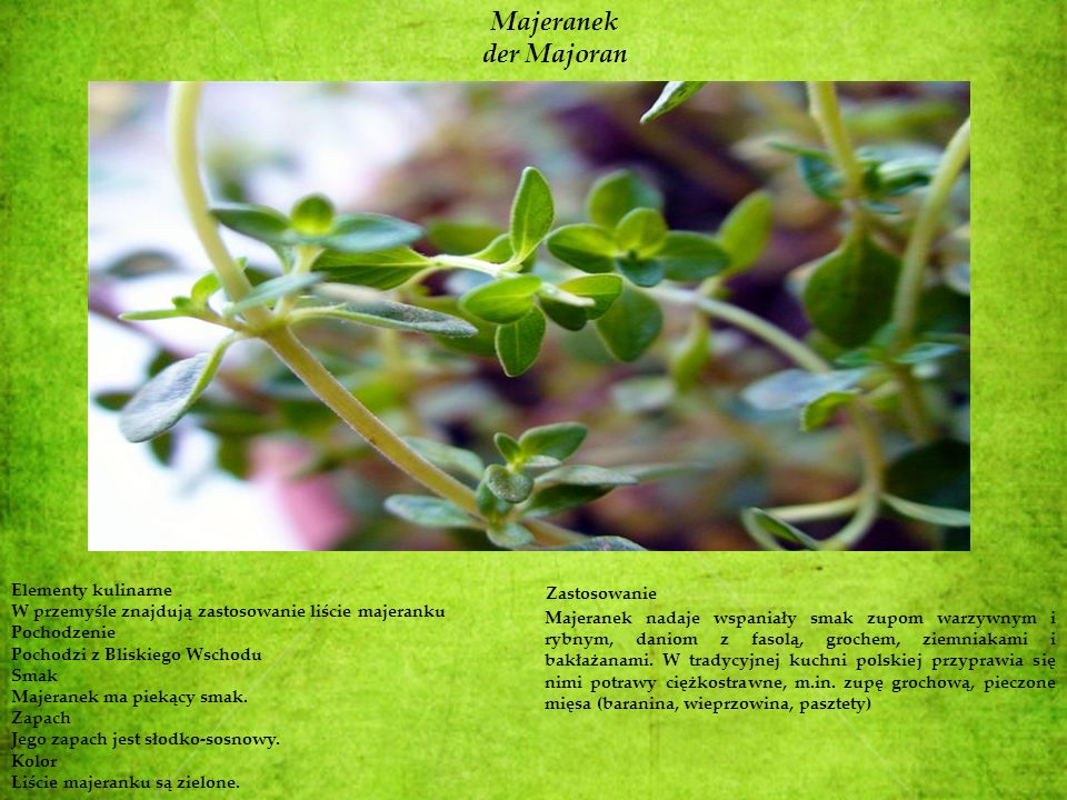 Majeranek der Majoran Elementy kulinarne Zastosowanie