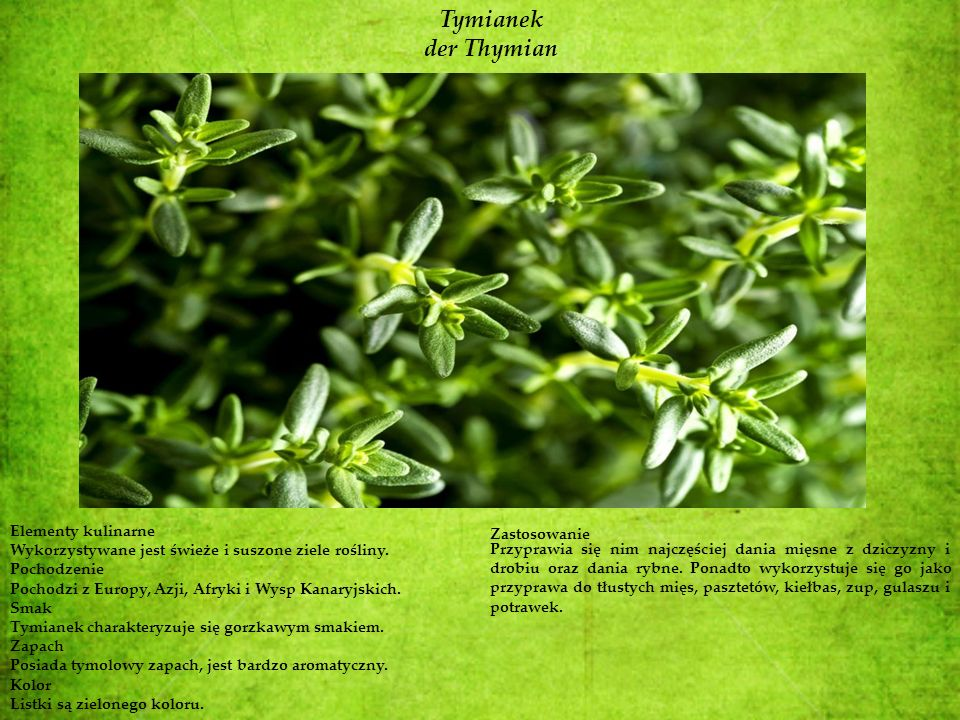 Tymianek der Thymian Elementy kulinarne Zastosowanie