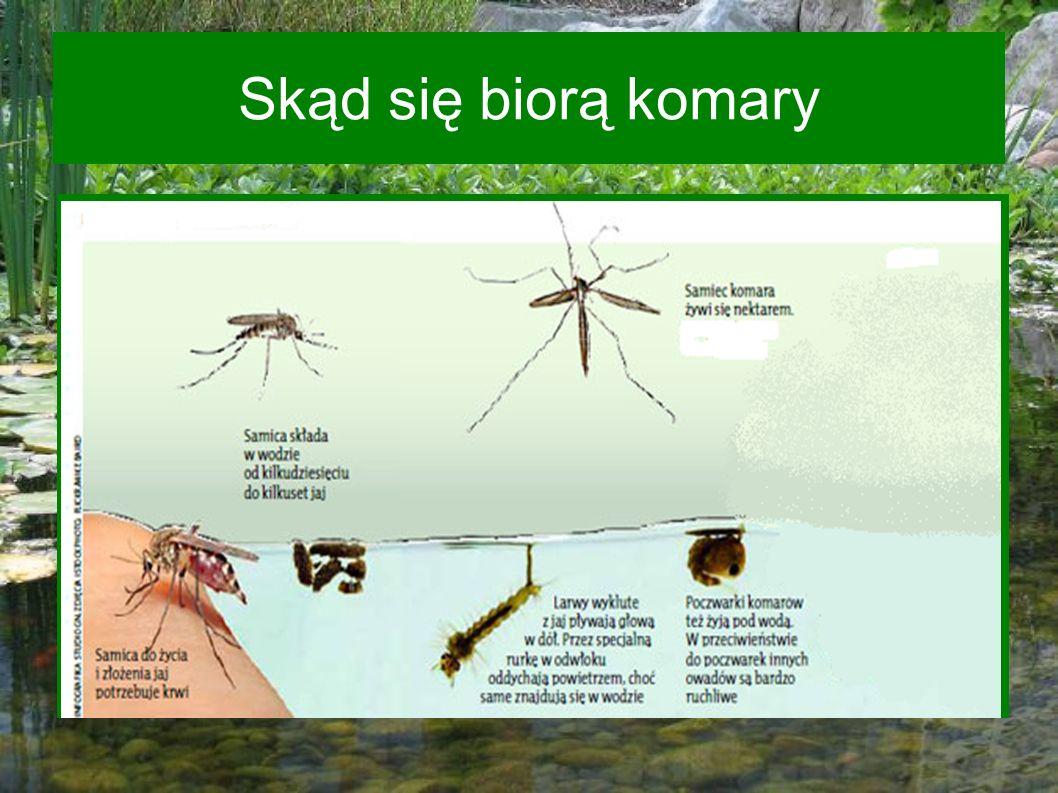 Skąd się biorą komary