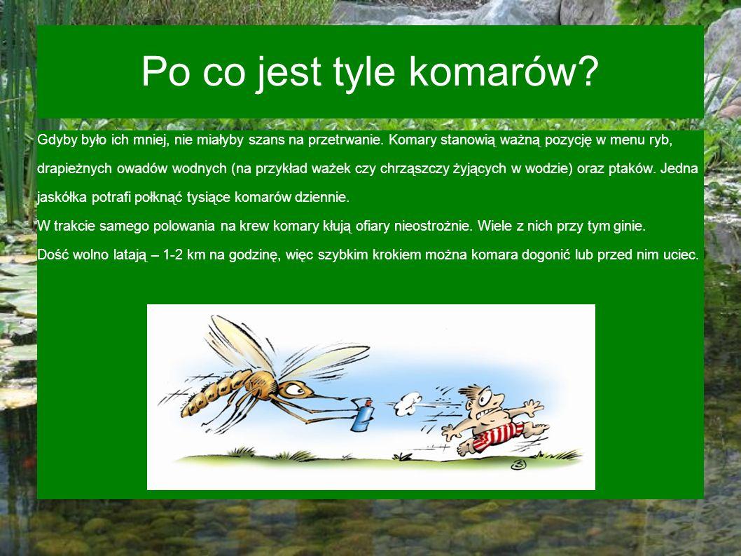 Po co jest tyle komarów Gdyby było ich mniej, nie miałyby szans na przetrwanie. Komary stanowią ważną pozycję w menu ryb,