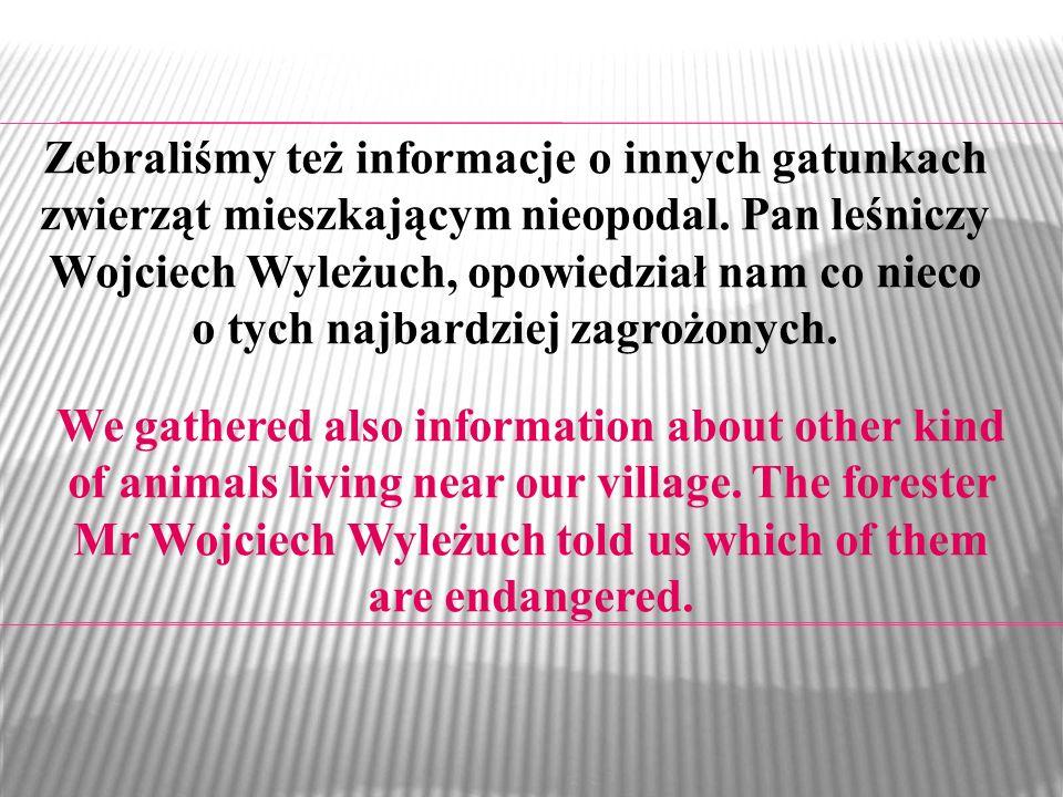 Zebraliśmy też informacje o innych gatunkach zwierząt mieszkającym nieopodal. Pan leśniczy Wojciech Wyleżuch, opowiedział nam co nieco o tych najbardziej zagrożonych.