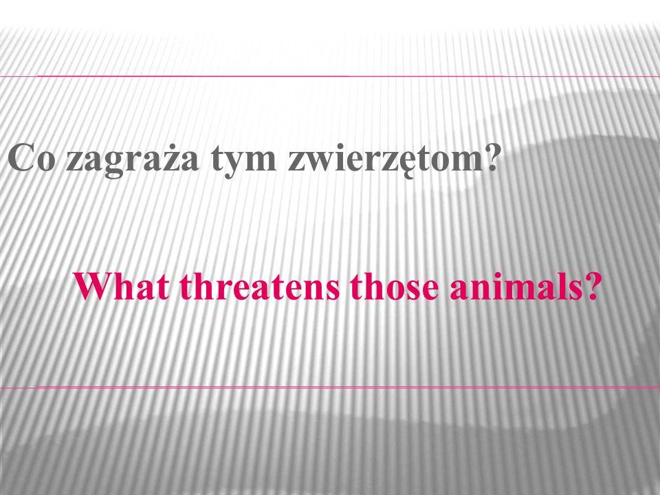 Co zagraża tym zwierzętom