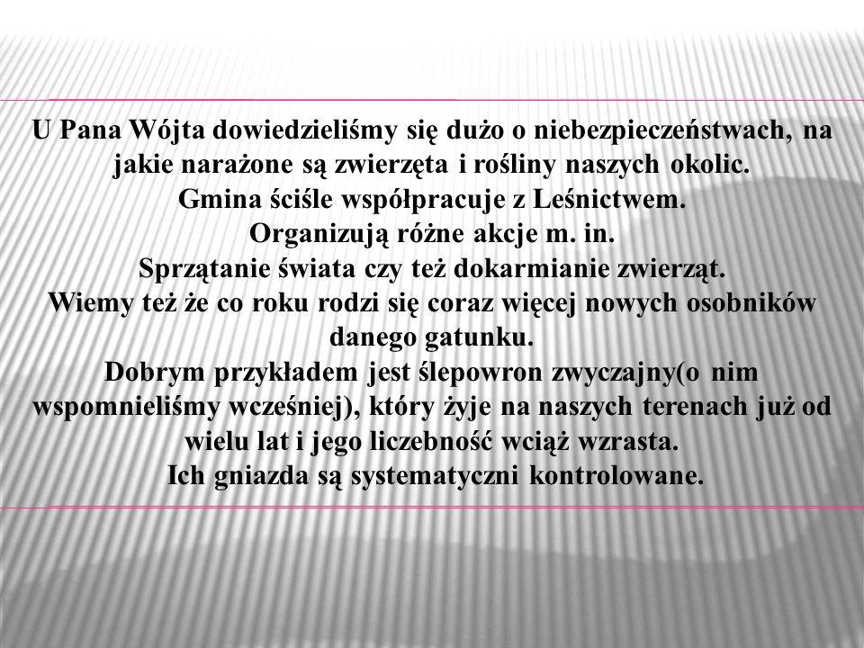 Gmina ściśle współpracuje z Leśnictwem. Organizują różne akcje m. in.