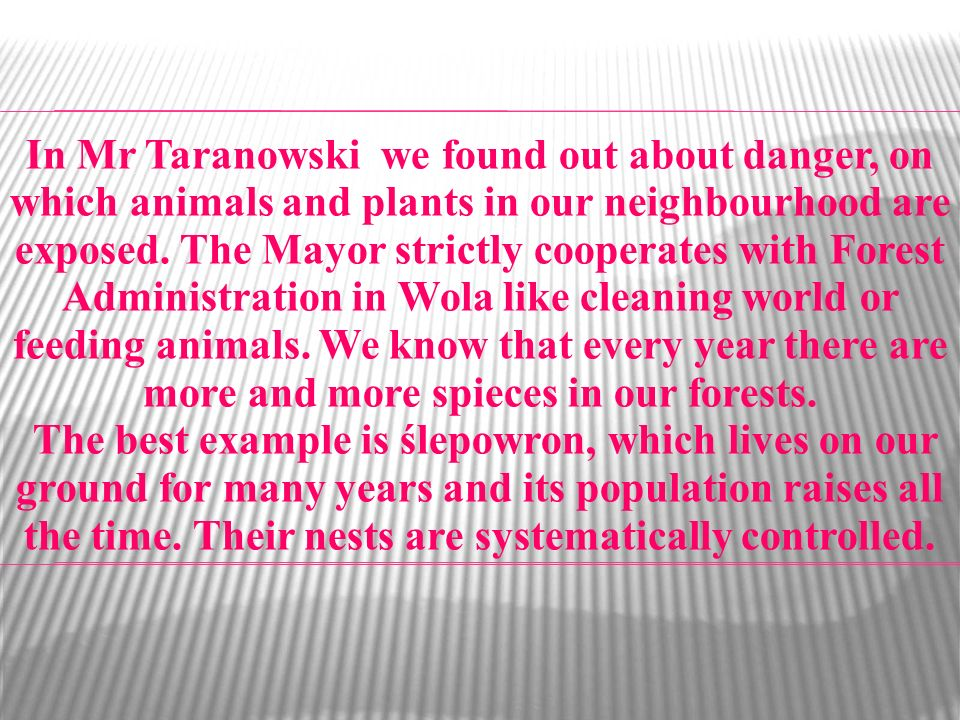 In Mr Taranowski we found out about danger, on which animals and plants in our neighbourhood are exposed. The Mayor strictly cooperates with Forest Administration in Wola like cleaning world or feeding animals. We know that every year there are more and more spieces in our forests.