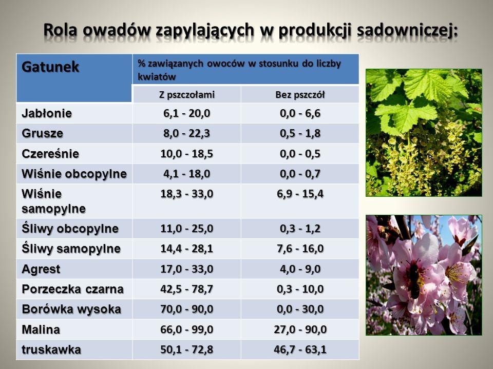 Rola owadów zapylających w produkcji sadowniczej: