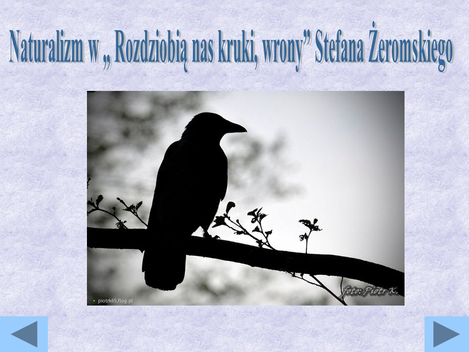 """Naturalizm w """" Rozdziobią nas kruki, wrony Stefana Żeromskiego"""