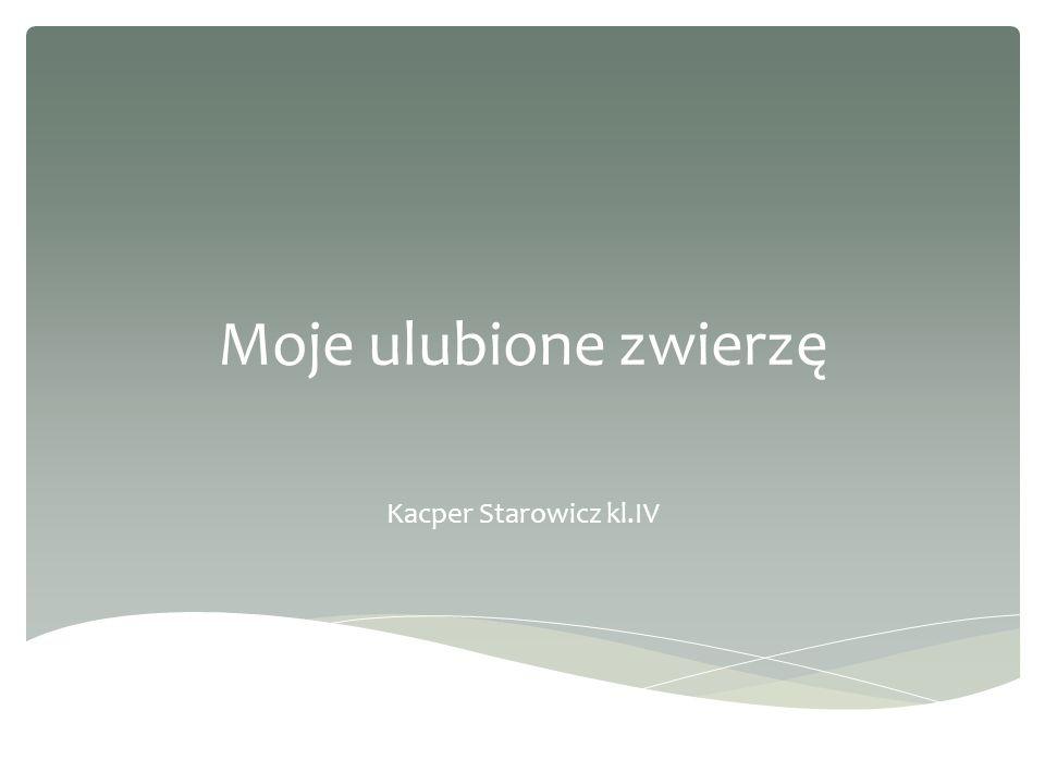 Moje ulubione zwierzę Kacper Starowicz kl.IV