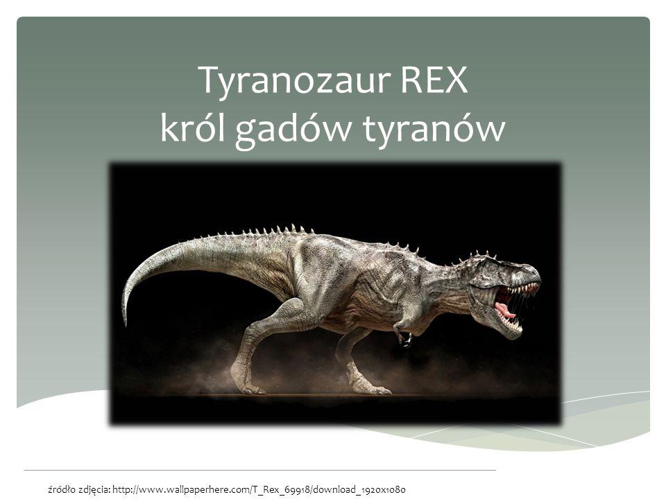 Tyranozaur REX król gadów tyranów