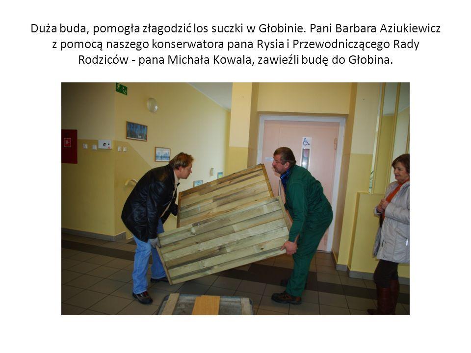 Duża buda, pomogła złagodzić los suczki w Głobinie