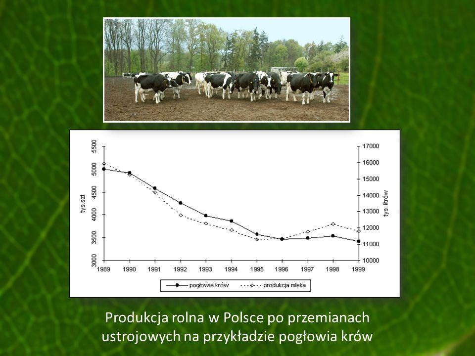 Produkcja rolna w Polsce po przemianach ustrojowych na przykładzie pogłowia krów