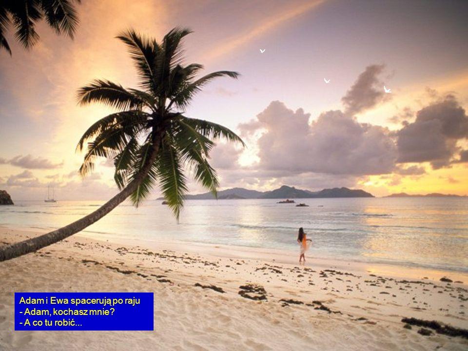 Adam i Ewa spacerują po raju - Adam, kochasz mnie - A co tu robić...