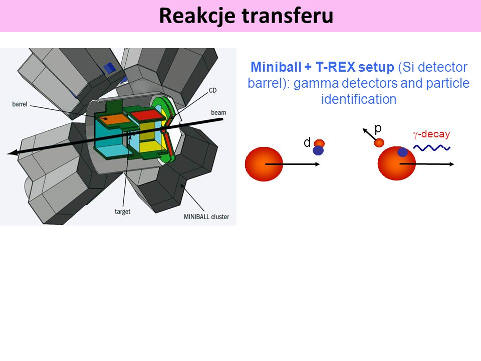 Reakcje transferu Miniball + T-REX setup (Si detector barrel): gamma detectors and particle identification.