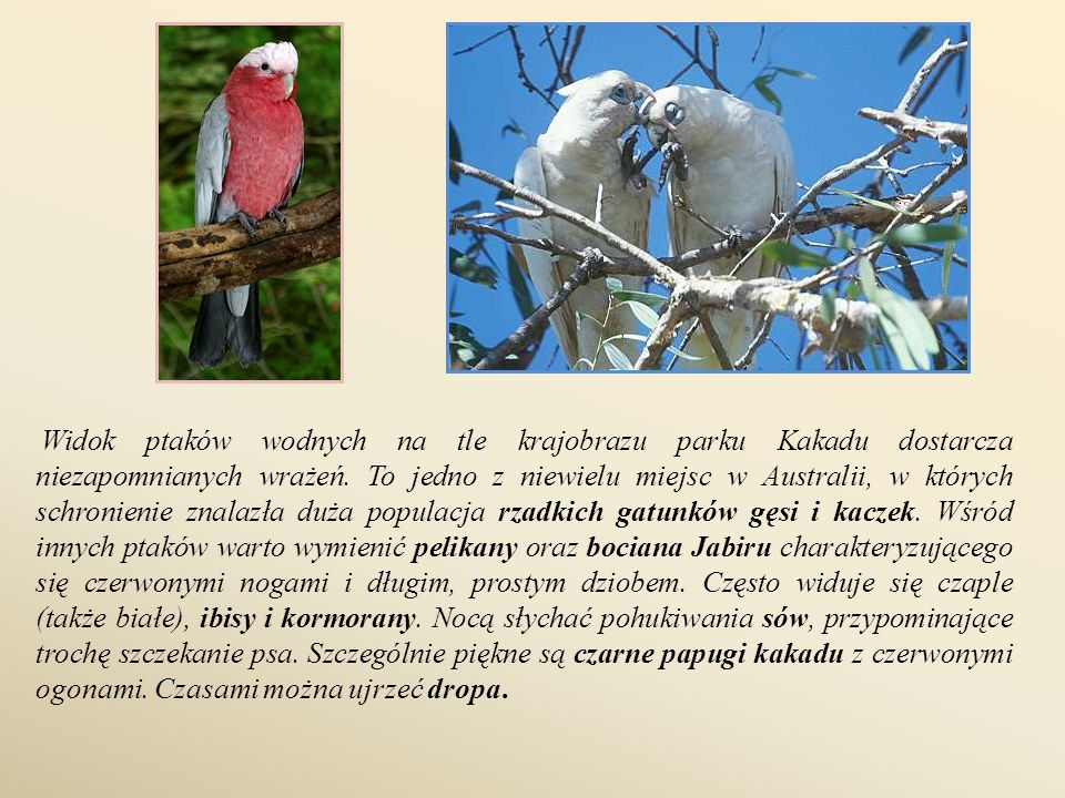 Widok ptaków wodnych na tle krajobrazu parku Kakadu dostarcza niezapomnianych wrażeń.