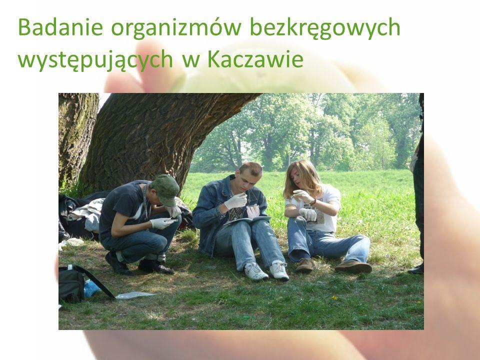 Badanie organizmów bezkręgowych występujących w Kaczawie