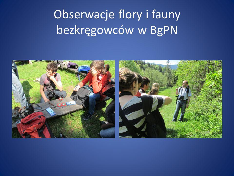 Obserwacje flory i fauny bezkręgowców w BgPN
