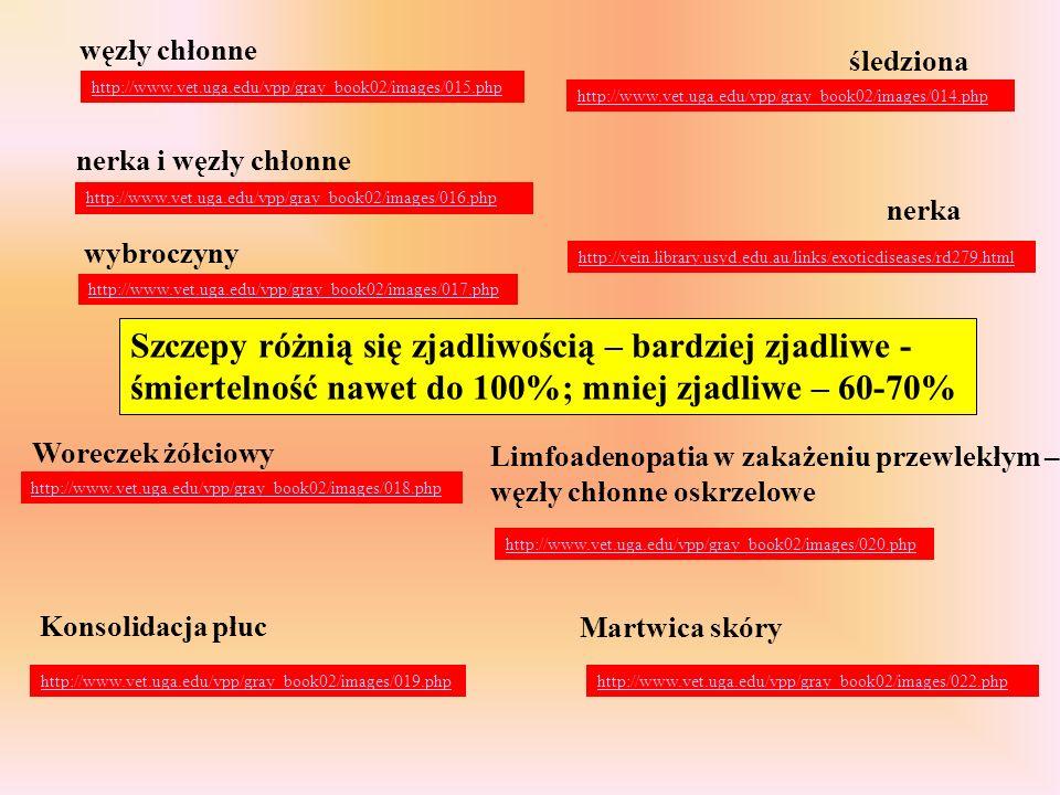 węzły chłonne śledziona. http://www.vet.uga.edu/vpp/gray_book02/images/015.php. http://www.vet.uga.edu/vpp/gray_book02/images/014.php.