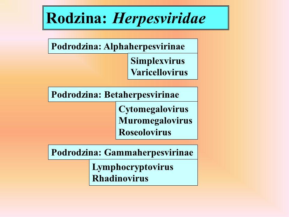 Rodzina: Herpesviridae