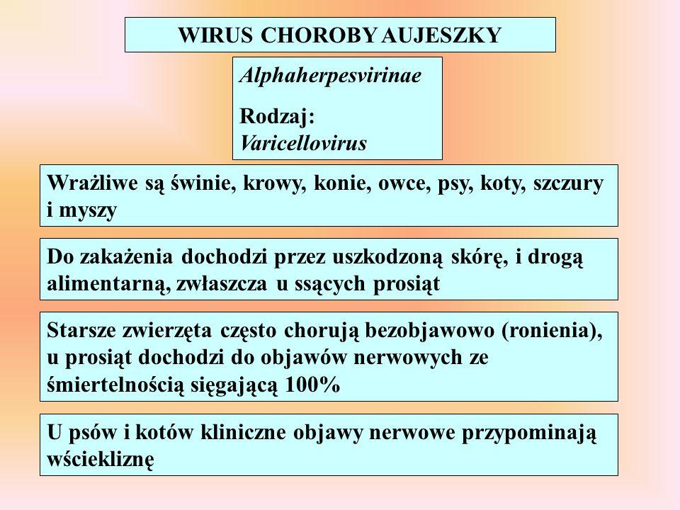 WIRUS CHOROBY AUJESZKY