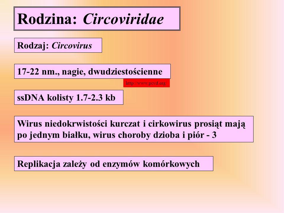 Rodzina: Circoviridae