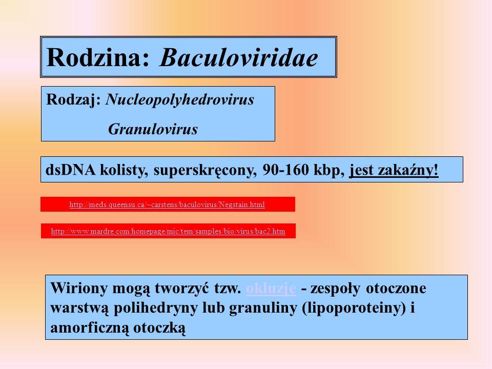 Rodzina: Baculoviridae