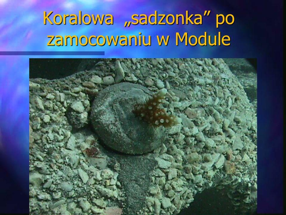 """Koralowa """"sadzonka po zamocowaniu w Module"""