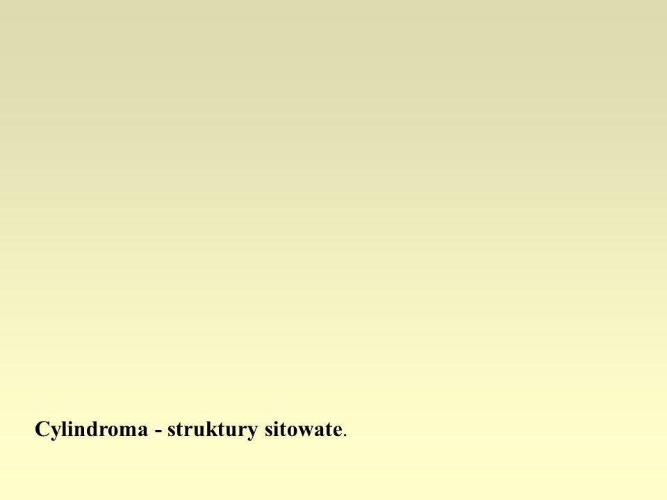 Cylindroma - struktury sitowate.